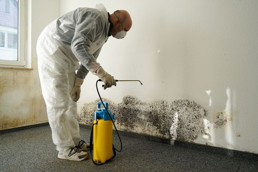 mold removal in Phoenix AZ